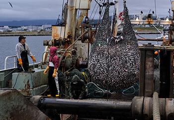 第八龍賽丸でとれた大量の魚、朝