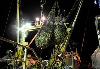 第八龍賽丸でとれた大量の魚、夜