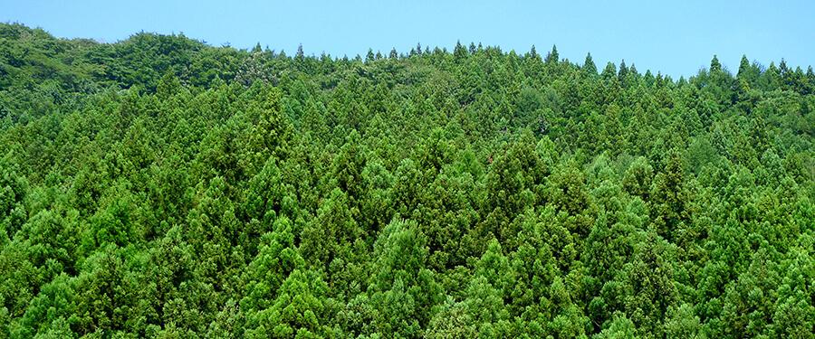 山、森林からの恵み